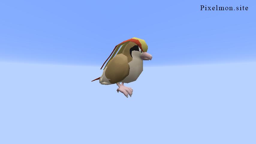 Ordinary Pidgeot